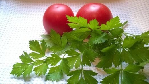 tomaatti_yrtti